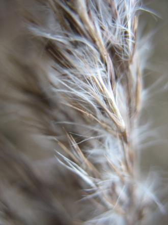2009-01-09 008